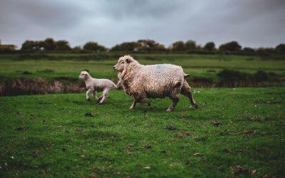 Zorg voor dieren in gedrang door coronavirus